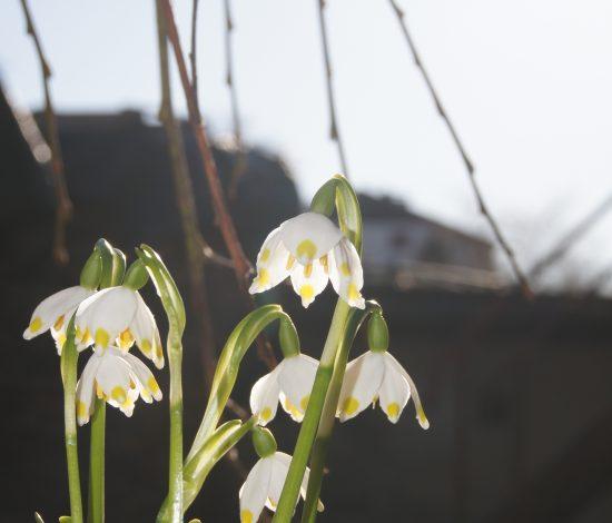 Frühling wirds beim Zollner